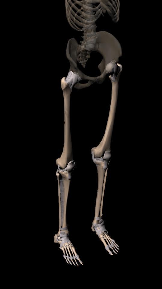 【定員間近】骨の力学的考え方・操作からみる評価と治療
