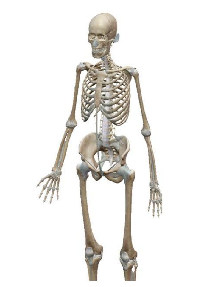 【残り1名】『骨の力学的考え方・操作からみる評価と治療』