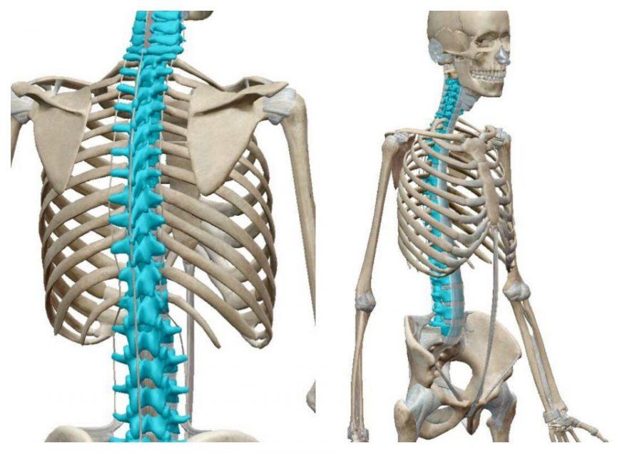 脊柱の評価と治療展開の在り方 in沖縄県中頭